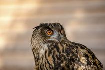 Diese Augen von Harald Schottner