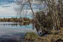 Uferlandschaft Vogelsee im NSG Pfrunger-Burgweiler Ried by Christine Horn