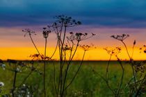 Dried grasses against the sunset skies von Marie Selissky