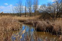 Nature area of Lake Ivars and Vilasana by JOMA GARCIA I GISBERT