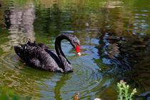 Black Swan 2 von Marie Selissky
