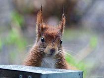 Eichhörnchen-2020-1 von maja-310