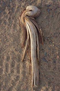 'Arab Desert Find II' by Juergen Seidt