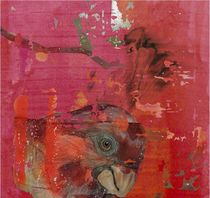red parrot ?s dream by gaby roter