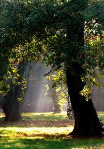 Sonne im Park by Rolf Müller