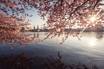 Frühling an der Alster by Simone Jahnke