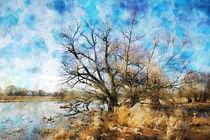 Alte Weiden am Flussufer der Havel im Land Brandenburg. Aquarell von havelmomente