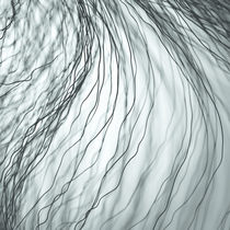 Dunkle Fasern grau von dresdner