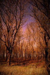 Magical pink wood with bare trees von Maud de Vries