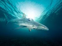 mini submarine explores the sea 3d-illustartion von Sven Bachström