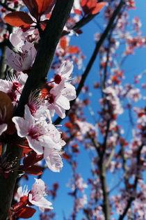 Colors of spring by feiermar