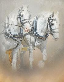 Percheron by Trudi Simmonds