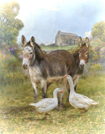 Farm Friends by Trudi Simmonds