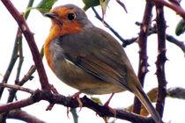 Robin 05 von GEORGE ELLIS