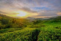 Sonnenaufgang über den Teeplantagen by Claudia Schmidt