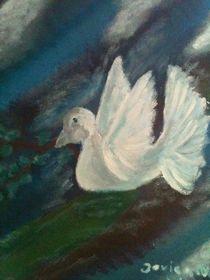 Friedenstaube Noah von Jovica Noah Kostic