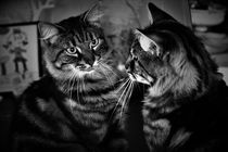 Tabby cat looks in the mirror by Maud de Vries