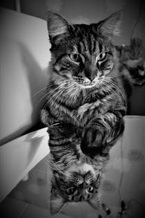 Tabby cat with reflection in black and white by Maud de Vries