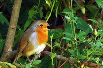 Robin 09 von GEORGE ELLIS
