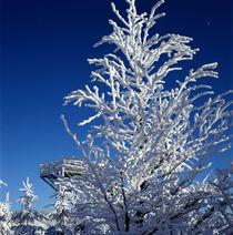 Wintertraum_2 von li-lu