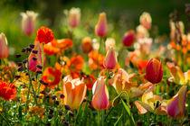 Kunterbunte Blumenpracht by Renate Dohr