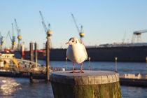 Harbour Seagull von Julian Berengar Sölter