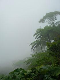 Rain Forest von Julian Berengar Sölter