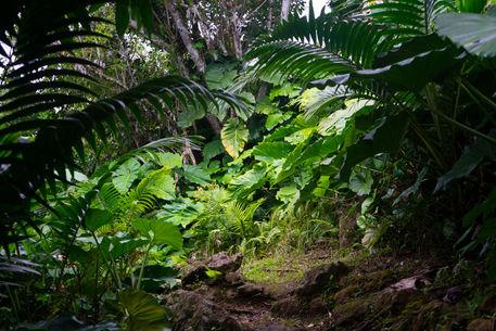 Artflakes-jungle