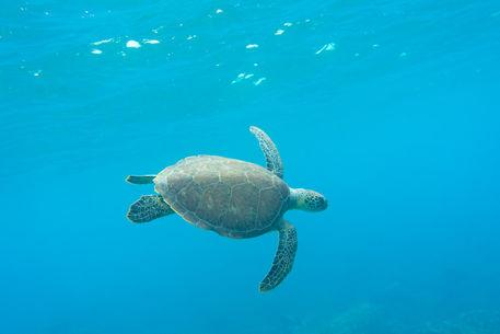 Artflakes-hello-turtle
