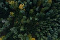 Autumn Vibes von Julian Berengar Sölter