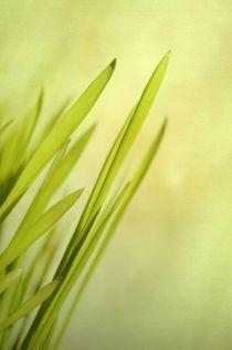 Greenblades