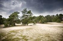 Verdener Dünen in Norddeutschland I von Thomas Schaefer