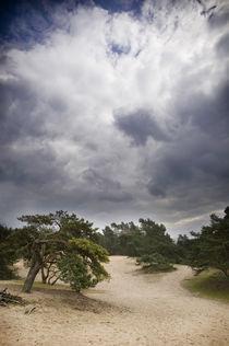Verdener Dünen in Norddeutschland II von Thomas Schaefer
