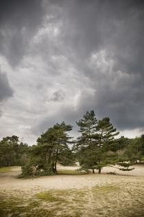 Verdener Dünen, Norddeutschland III von Thomas Schaefer