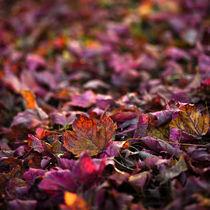 Herbstlaub von Krystian Krawczyk