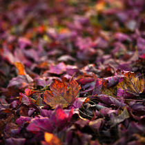 Herbstlaub by Krystian Krawczyk