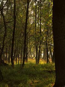 Bäume von Jens Uhlenbusch