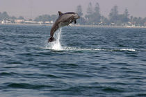 Übermut by Gesellschaft zur Rettung der Delphine e.V.