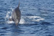 Hals über Kopf von Gesellschaft zur Rettung der Delphine e.V.