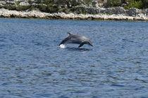 Spaß & Spiel von Gesellschaft zur Rettung der Delphine e.V.