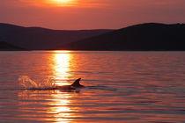 Abendhimmel über der kroatischen Adria by Gesellschaft zur Rettung der Delphine e.V.