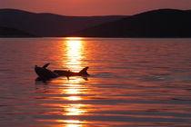 Delfinspiel im Abendrot von Gesellschaft zur Rettung der Delphine e.V.