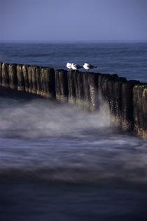 Möwen auf Wellenbrechern von Krystian Krawczyk