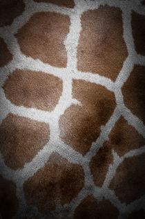 Giraffenfell von Krystian Krawczyk