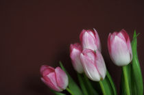 Tulpen I