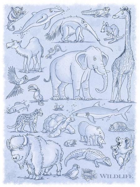 Wildlife-tiere-3