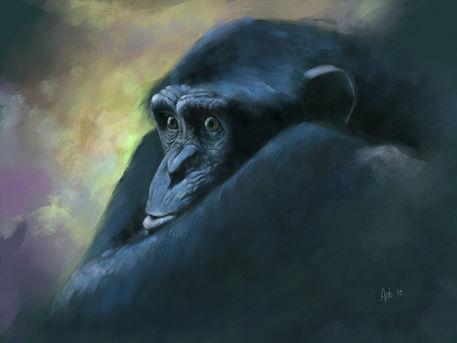 Chimp-l