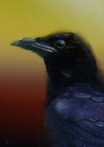 Raven by Arie Vanderwyst