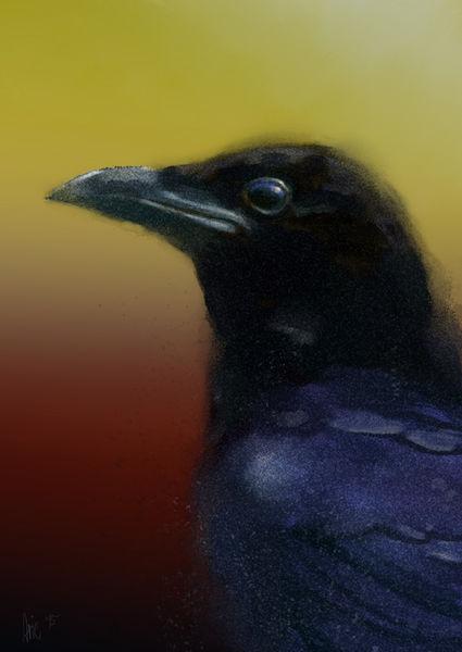Raven-2a