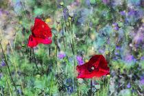 Wildblumen an Mohn von Petra Dreiling-Schewe